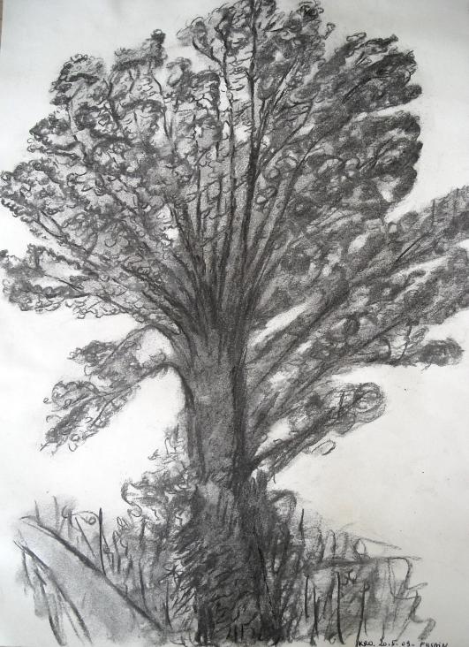 Etude d 39 arbre au fusain - Dessins d arbre ...
