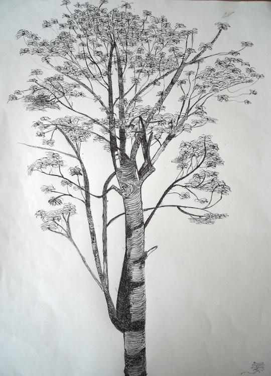 Etude d 39 arbre au stylo noir - Dessins d arbre ...